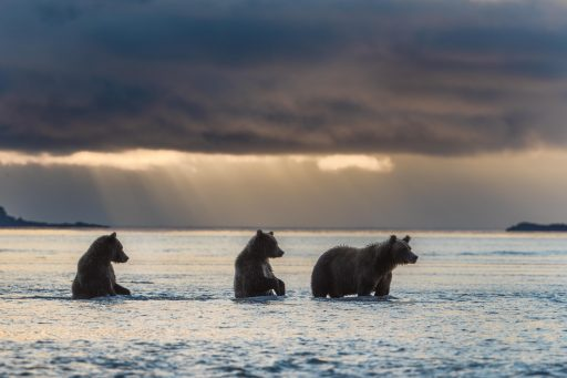 Hallo bay - Alaska